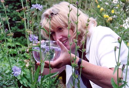 Judy Harvesting